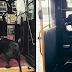 Σκύλος παίρνει μόνος του κάθε μέρα το λεωφορείο για να πάει βόλτα στο πάρκο (video)