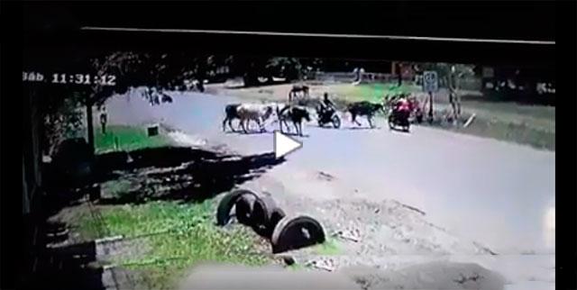 NUNCA TENTE ATROPELAR UMA VACA LUTADORA DE KUNG-FU