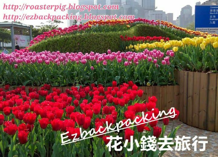 香港花卉展覽2021:中西區中環鬱金香
