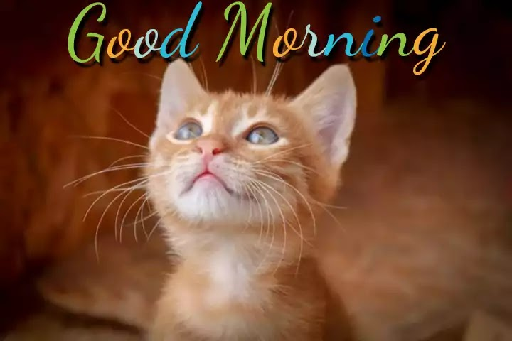 Good Morning Cat Images Hd Download