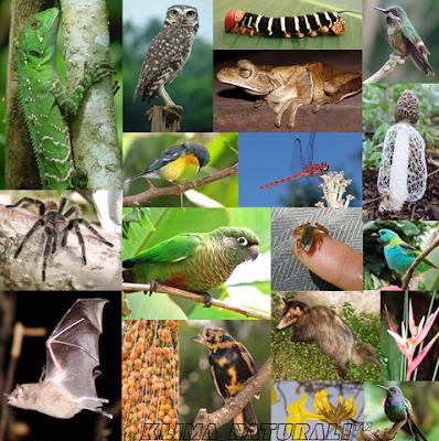 Biodiversidade do Planeta e a Vida Faunística da Terra