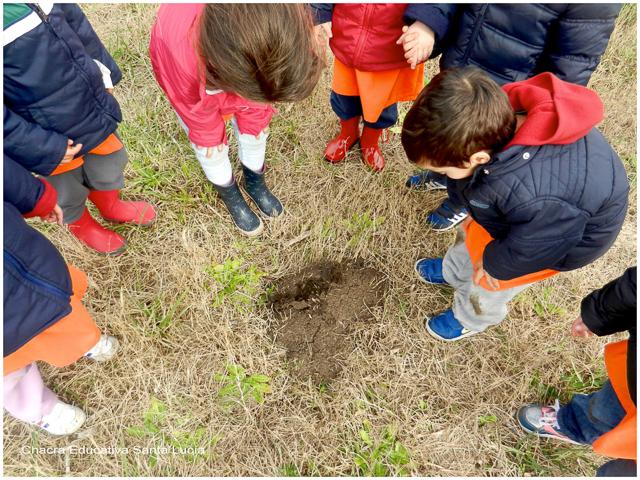 Observando un hormiguero - Chacra Educativa Santa Lucía