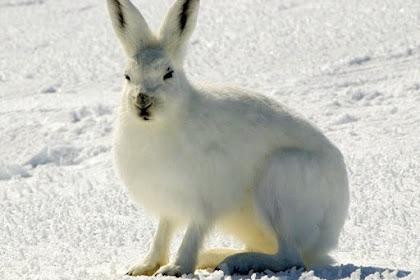 عالم الحيوانات و اغرب 8  حيوانات تم اكتشافها في القطب الشمالي
