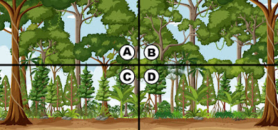 Spot The 4 Leaf Clover Quiz Answers