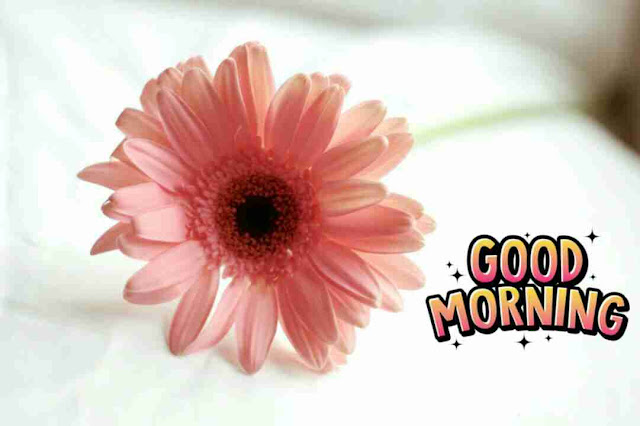 Awesome good morning image with pink rose flower have a good day