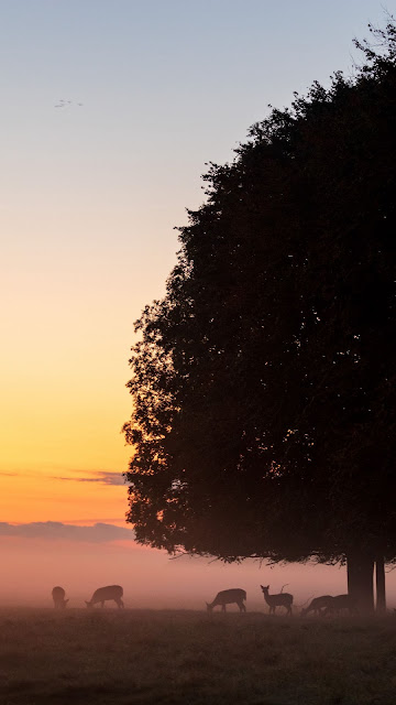 Deer, tree, fog, forest, nature dawn