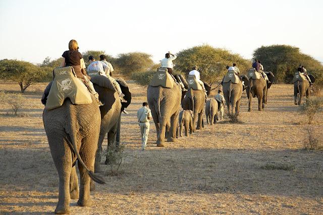 Wildlife Safari is most popular adventure activity in India