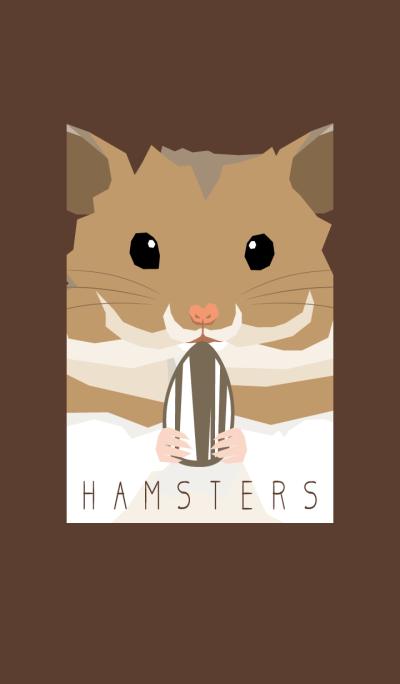 HAMSTERS - Golden hamster -