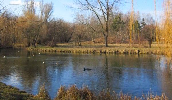 Pond with ducks in the autumnal time