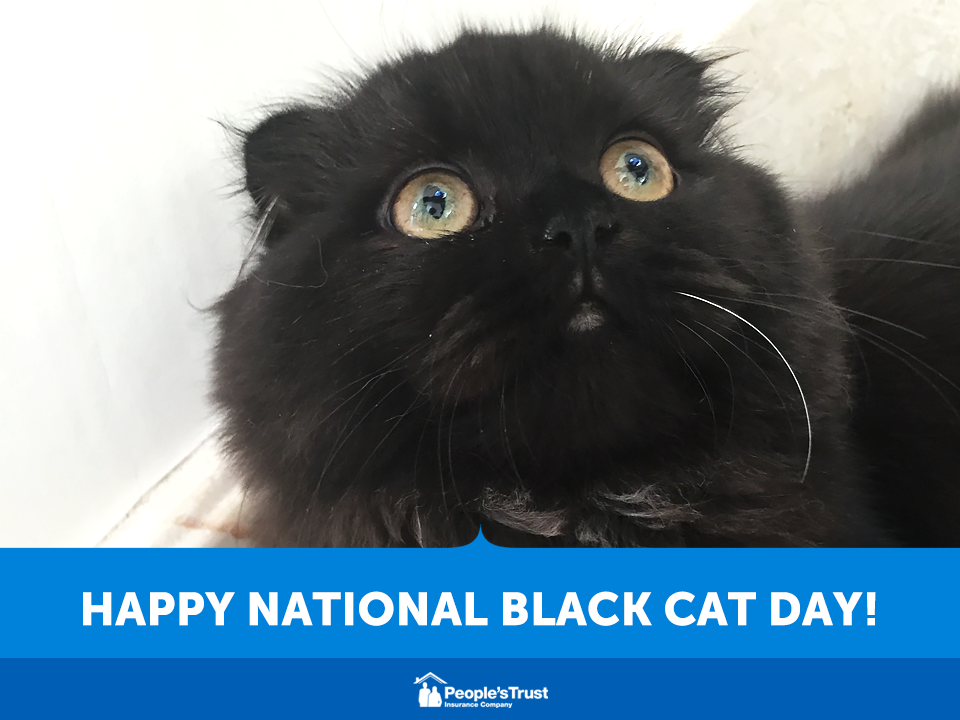 National Black Cat Day Wishes Pics