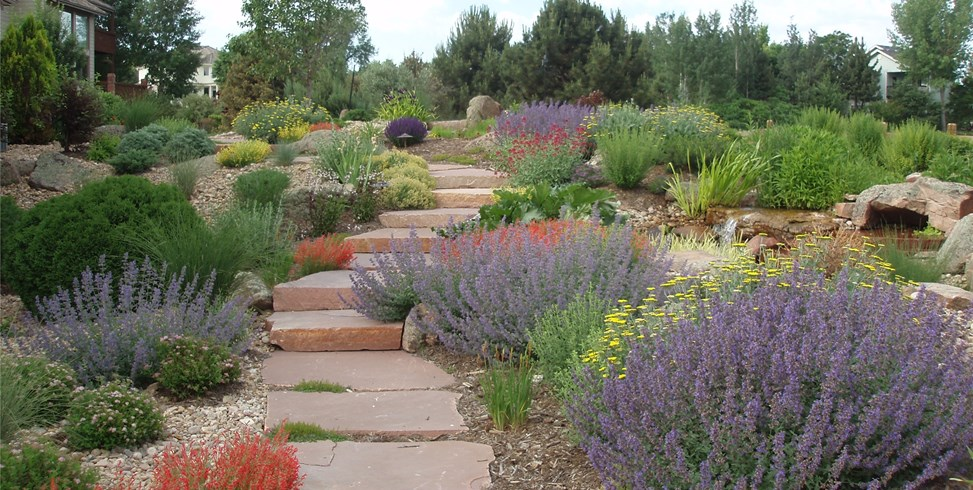 Gardening for arid landscapes the beauty of xeriscaping for Xeriscaped backyard design