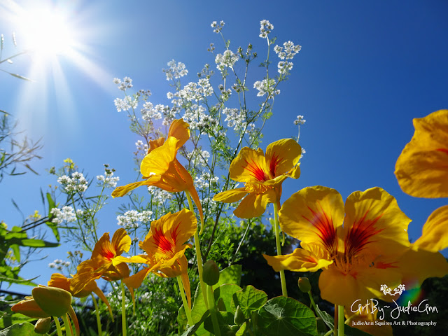 Blue Sky & Nasturtiums 2 Photos
