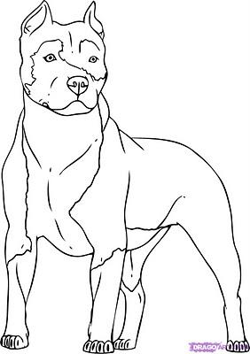Desenhos De Pitbull Para Colorir
