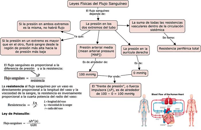 imagen de Mapa conceptual sobre las leyes físicas del flujo sanguíneo