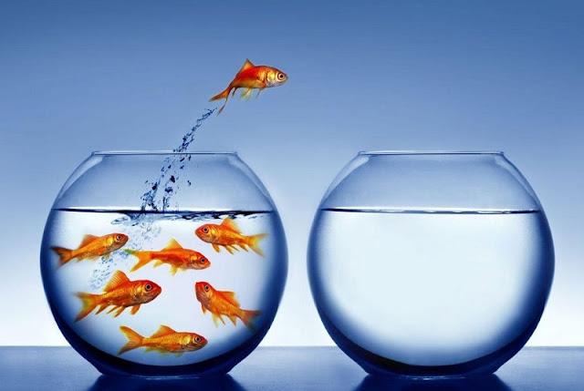 akuarium i vogël me peshq