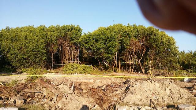 Denuncian tala ilegal de manglares en Sisal. Antonio Sánchez González