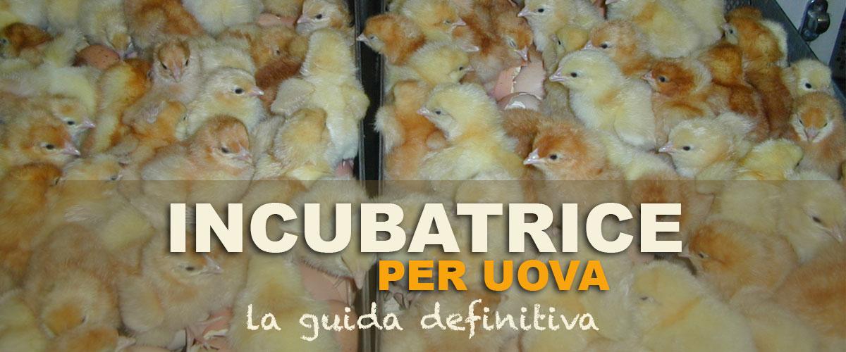Incubatrice uova per pulcini