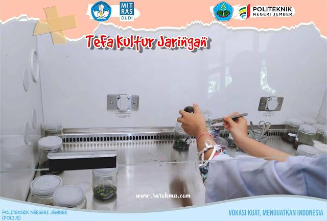 TeFa Kultur Jaringan Polije
