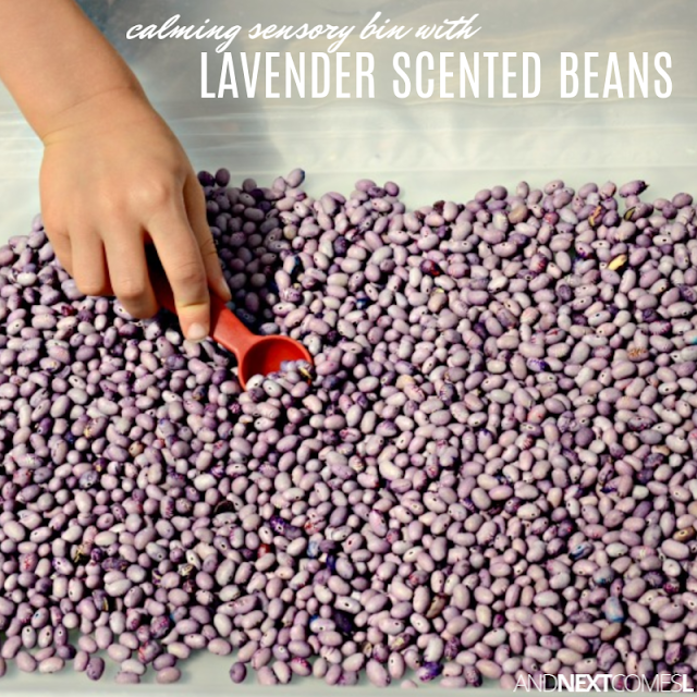 Calming activity for kids using lavender scented sensory beans