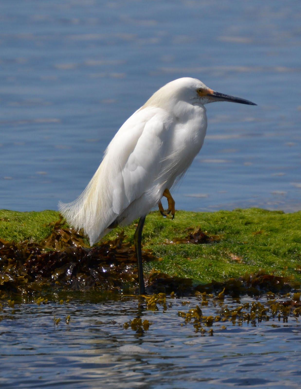 Woods Walks And Wildlife Seaside Adventures With Birds In
