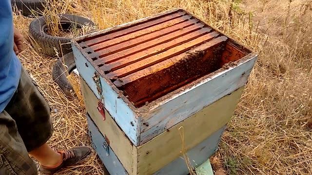 Επιθεώρηση μελισσιού, που είναι έτοιμο για ξεχειμώνιασμα BINTEO