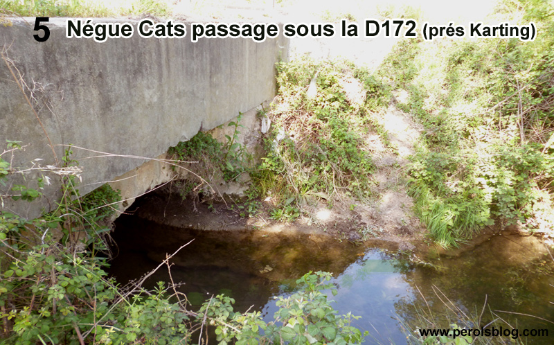 Riviève Nègue Cats à Pérols