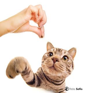 5 dicas de como treinar seu gato