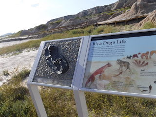an information sign reveals facts about prehistoric dogs alongside a cast of a fossil from one, along Fossil Trail in Badlands National Park