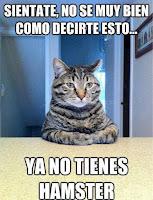 gato meme humor hamster