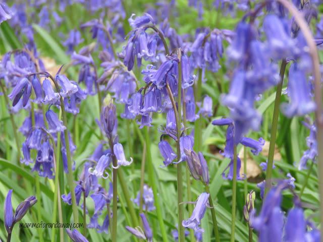 fiori inglesi primavera