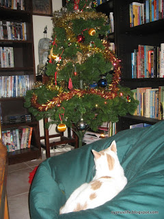 Alex the cat, wondering which decoration to attack next