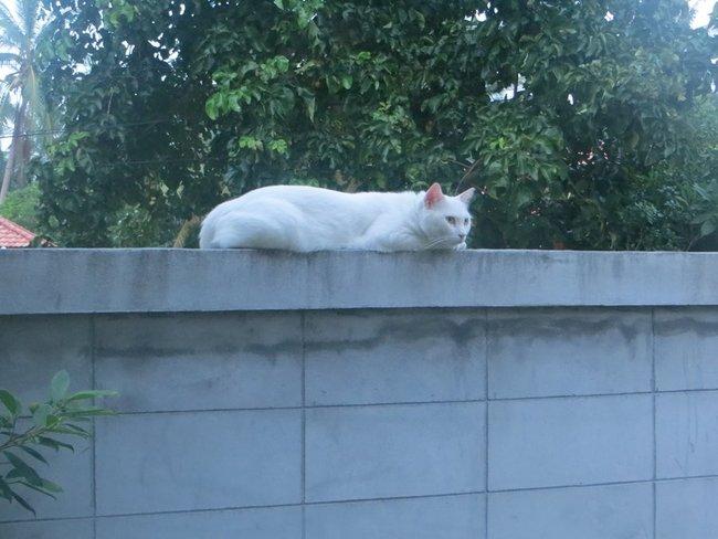 Кот лежит на заборе