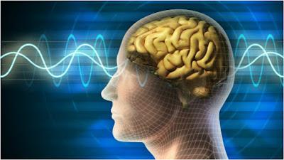 Lychee improves memory power