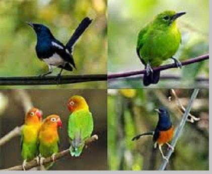 Burung (Aves) - berbagaireviews.com