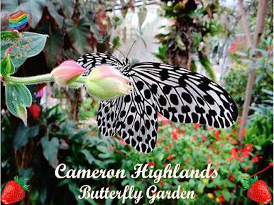 Cameron Highlands, Butterfly Garden
