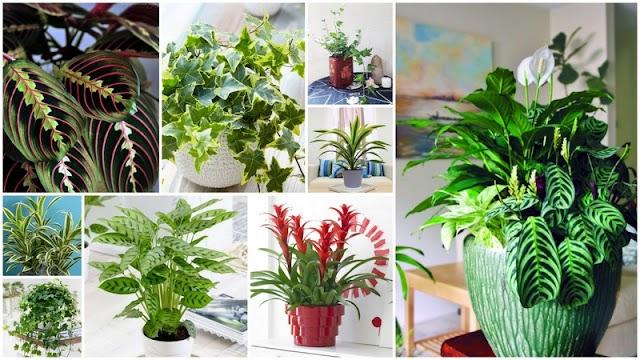 ΚΗΠΟΥΡΙΚΗ: 6 Φυτά Εσωτερικού Χώρου που δεν χρειάζονται πολύ φως