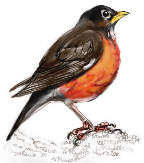 American Robin bird painting by Artmagenta