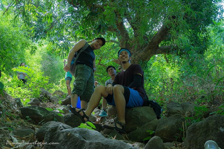 Shady mango tree along the trail