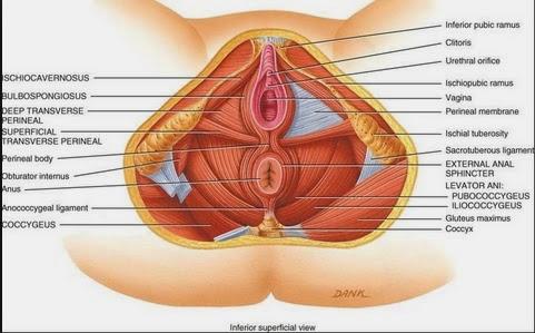 corredor de la muerte del dolor perineal