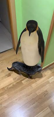 Un pingüino en mi salón