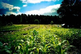 Bagaimana Mengusahakan Tanah Yang memiliki Geran