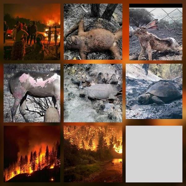 URGENTE: incendios forestales en todo el planeta tierra.