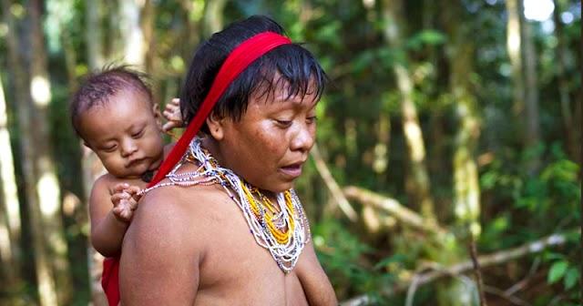 Artigo descreve como os Yanomami estão usando estratégias ancestrais para enfrentar a covid