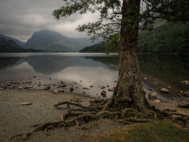 Photo of tree roots and reflections in Lake Buttermere