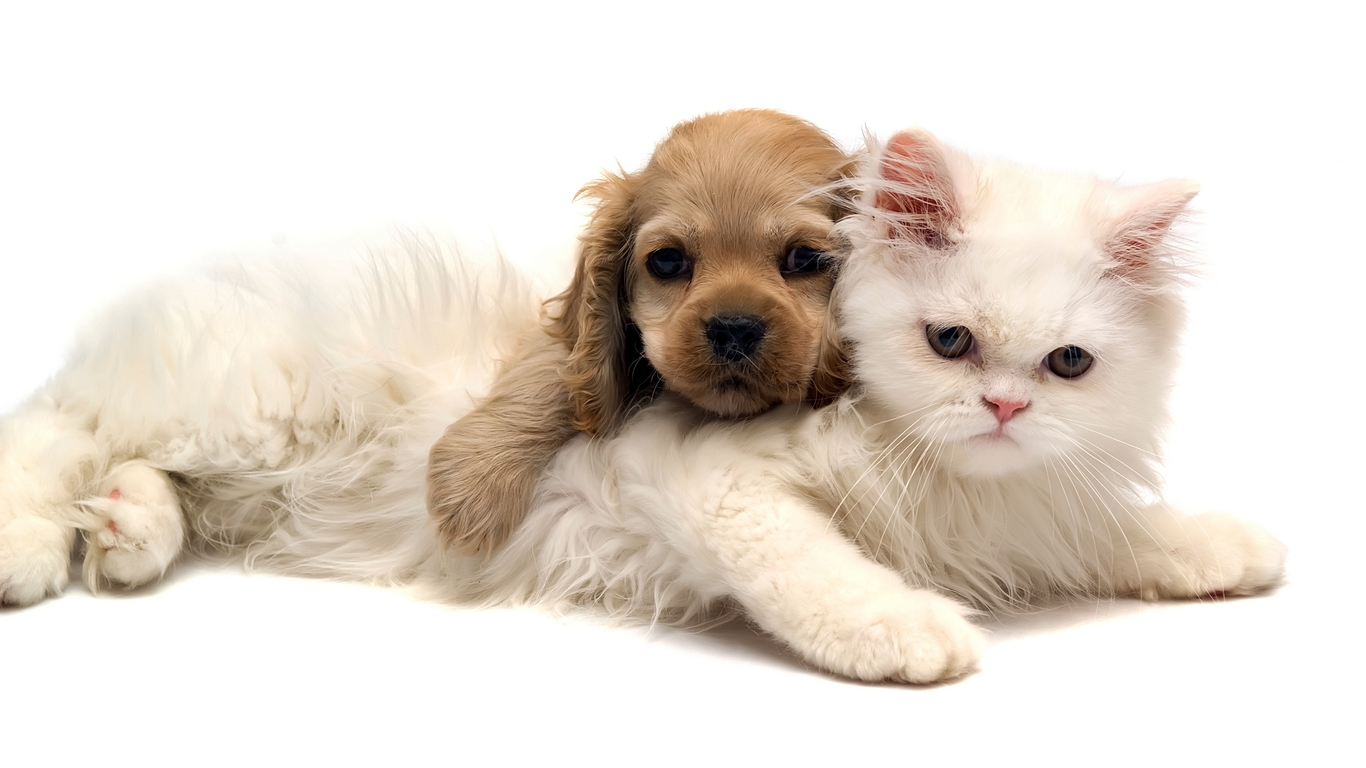 Cute Puppy Loves Cat Photo Dog Wallpapers Backgrounds | Dogs Wallpapers Backgrounds