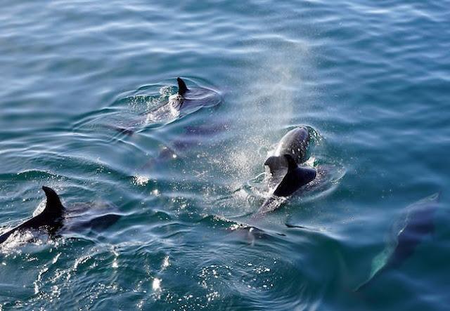 dolphin encounters panama city beach
