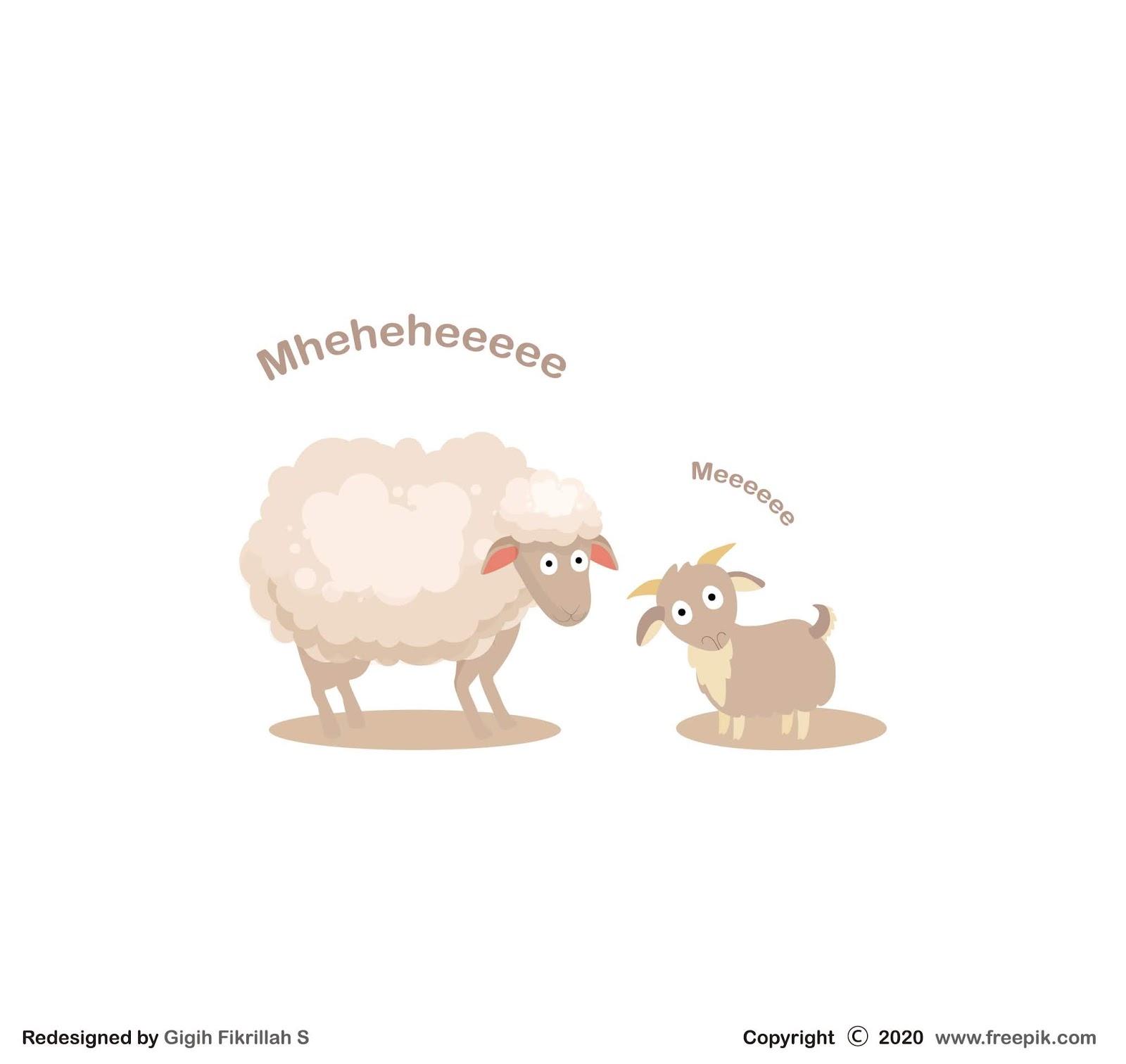 11 Perbedaan Kambing dan Domba yang Harus Kamu Ketahui ...