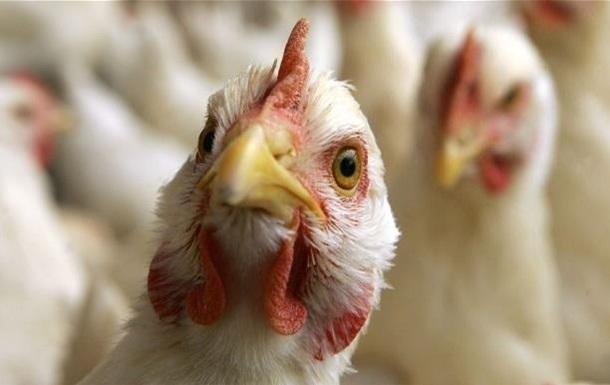 ЗМІ дізналися, що думає ЄС про українську курятину