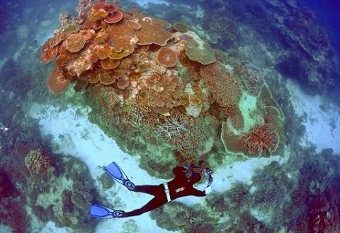 Tengerfenéki kerteket fedeztek fel kínai kutatók a Mariana-árokban