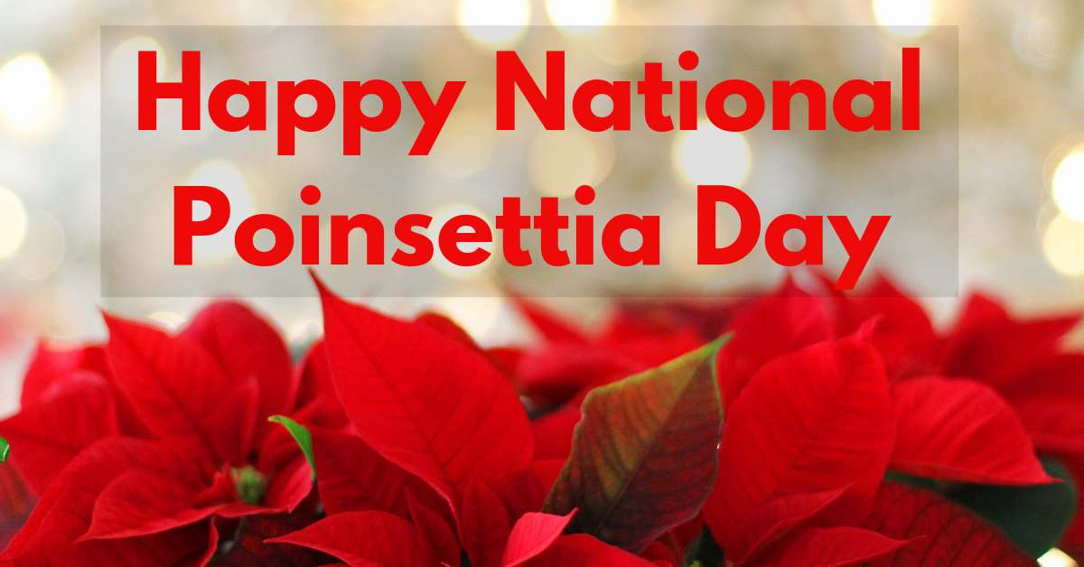 National Poinsettia Day Wishes for Whatsapp